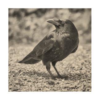 Impression Sur Bois Oiseau noir, corneille, sur les roches