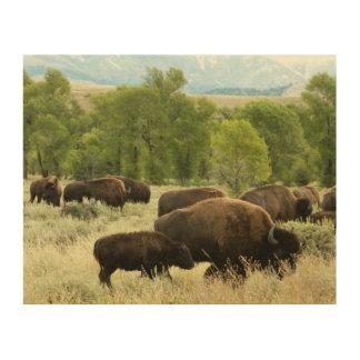 Impression Sur Bois Photographie d'animal de nature de bison du