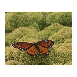 Impression Sur Bois Photographie de nature de papillon de vice-roi