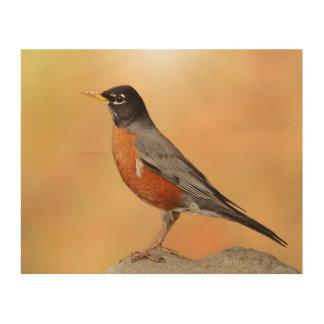 Impression Sur Bois Photographie d'un Robin été perché sur une roche