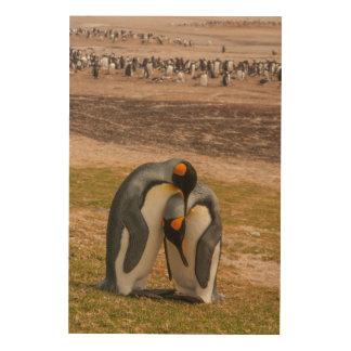 Impression Sur Bois Pingouins de roi caressant, les Malouines