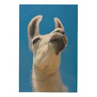 Impression Sur Bois Portrait de lama