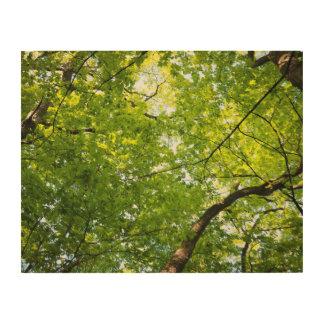 Impression Sur Bois Sous l'art en bois de mur de voûte de forêt
