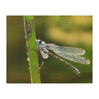 Impression Sur Bois Toile bleue en bois de libellule
