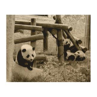 Impression Sur Bois Trois pandas - style de sépia