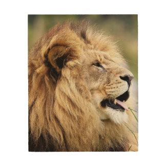 Impression Sur Bois Un lion de Judah