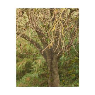 Impression Sur Bois Vieux arbre
