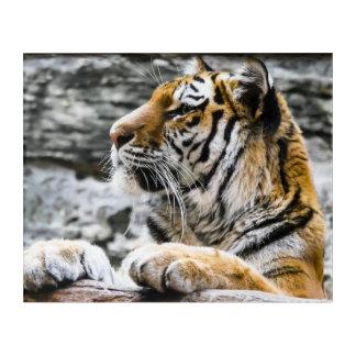 Impressions En Acrylique Cachette magnifique de tigre