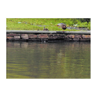 Impressions En Acrylique Canards par l'étang