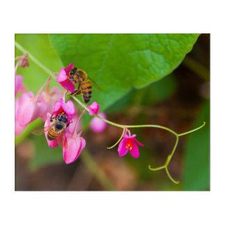 Impressions En Acrylique Les abeilles sur la vigne de corail fleurit la
