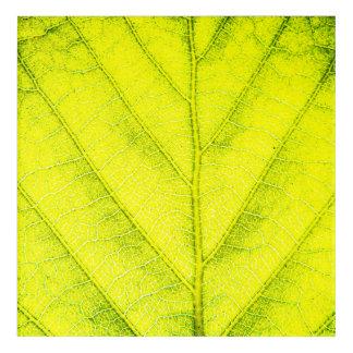 Impressions En Acrylique Macro vert de feuille
