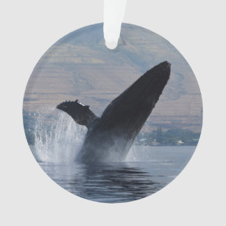 infraction de baleine de bosse