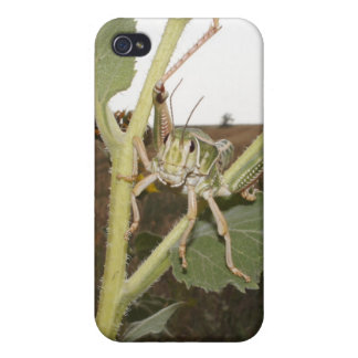 Insectes d'Ew ! iPhone 4/4S Case