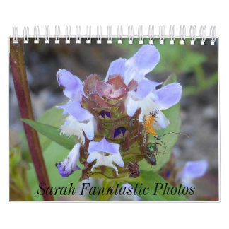 Insectes et calendrier de fleurs
