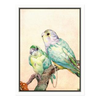 Inséparables - perruches par E.J. Detmold Carte Postale