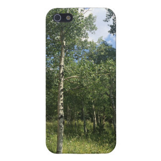 iPhone 5 Case Cas de vallée d'arbre d'Aspen