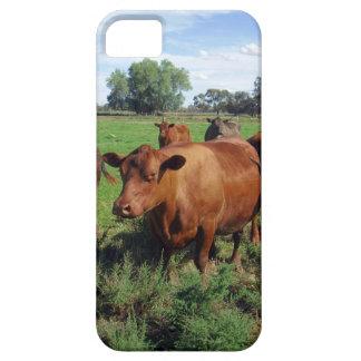 iPhone 5 Case Champ de vache à Brown,