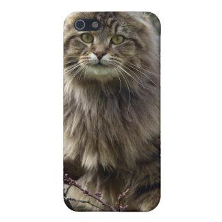 iPhone 5 Case Coque iphone à cheveux longs d'animal de chat