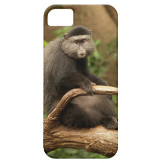 iPhone 5 Case iPhone 5 de singe