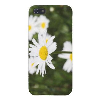 iPhone 5 Case Marguerites de floraison