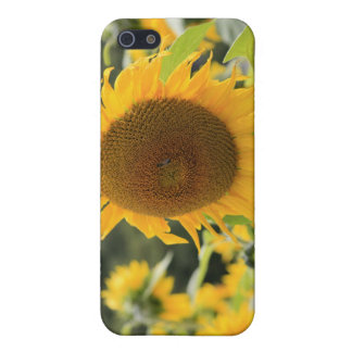 iPhone 5 Case Tournesols