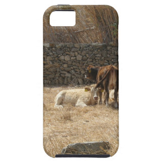 iPhone 5 Case Vaches