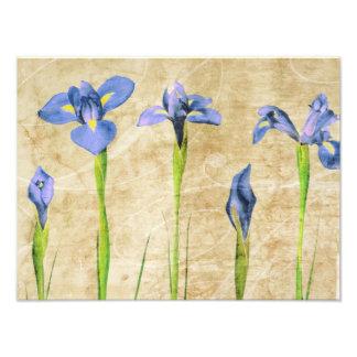 Iris antiques - personnaliser vintage d'arrière - photos sur toile