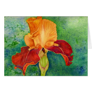 Iris barbu carte