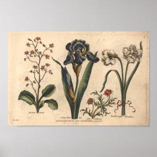 Iris botanique de bleu d'impression d'art de la