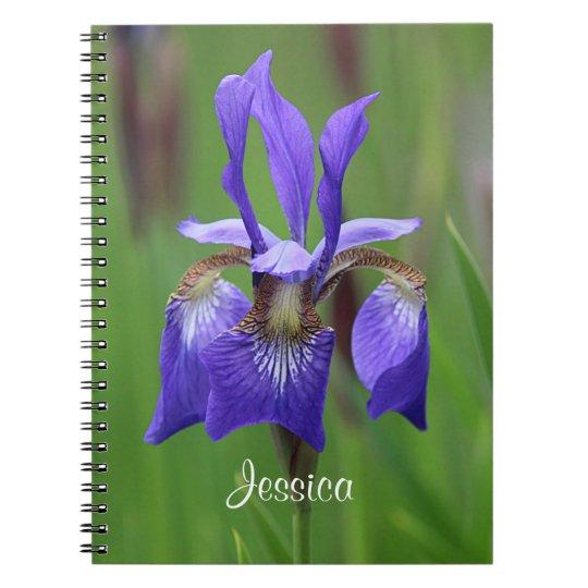 Iris pourpre carnet