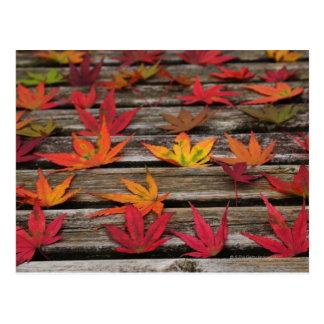 Japanse esdoornbladeren briefkaart