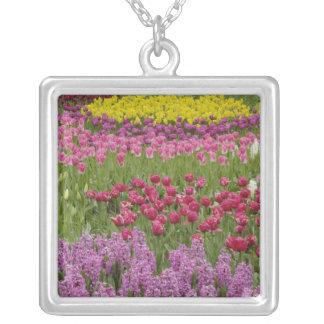 Jardin des tulipes, des jonquilles, et de la collier