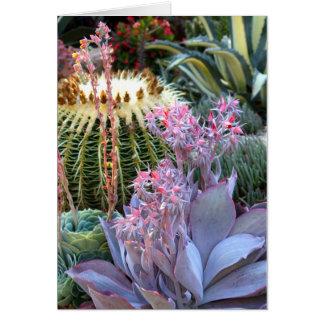 Jardin succulent coloré carte