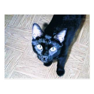 Je vous vois carte postale de chat noir