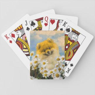 Jeu De Cartes Pomeranian dans les marguerites