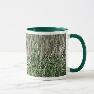 Jeune raton laveur mug