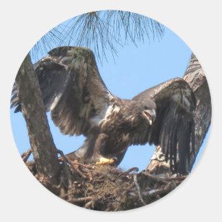 Jeunes autocollants féroces d'Eagle