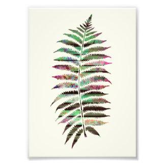 Jolie feuille botanique abstraite de paon photos d'art