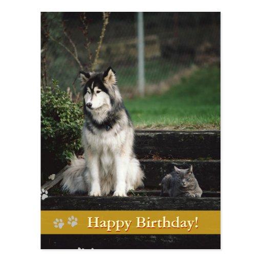 Joyeux anniversaire ! - carte postale de chien et