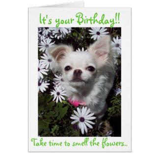 Joyeux anniversaire pour des chiens carte