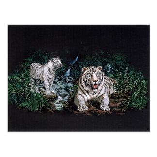 Jungle magique de tigre blanc carte postale