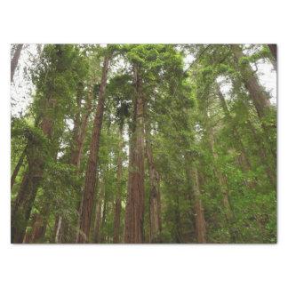 Jusqu'aux séquoias au monument national en bois de papier mousseline