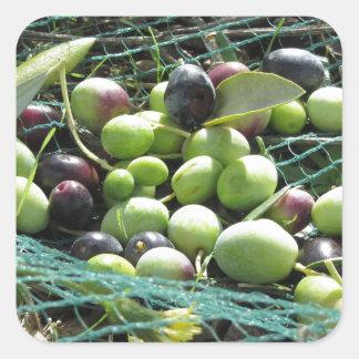 Juste olives sélectionnées sur le filet pendant le sticker carré