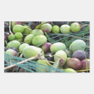 Juste olives sélectionnées sur le filet pendant le sticker rectangulaire