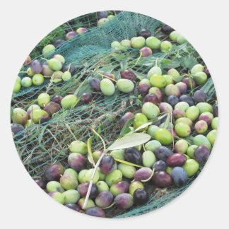 Juste olives sélectionnées sur le filet pendant le sticker rond