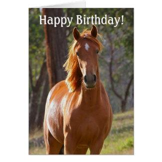 verjaardag vrouw met paard