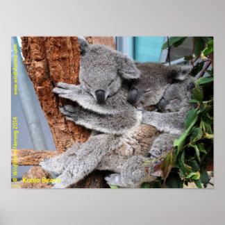 Koala australien poster