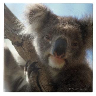 koala grand carreau carré