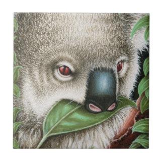Koala mâchant une tuile de feuille carreaux