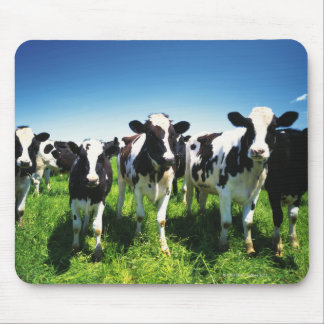 Koeien op het gebied, Betsukai stad, Hokkaido Muismat